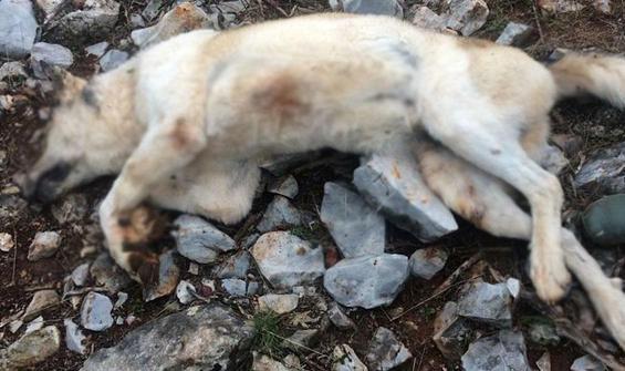 Köpeğini 'fazla ekmek yiyor' diye öldürdü