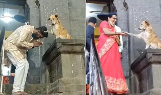 Hindistan'da tapınaktan çıkanları patisiyle 'zorla' kutsadı