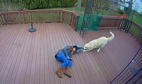 Köpeği yüzünden gülme krizine giren kadın kamerada