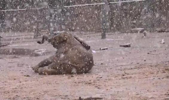 Bebek filin karla oyunu kamerada