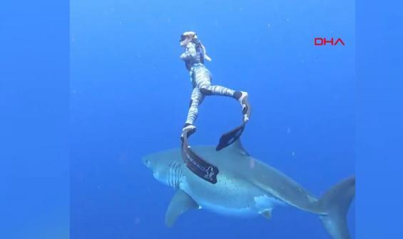 Dev köpekbalığı ile birlikte yüzdü