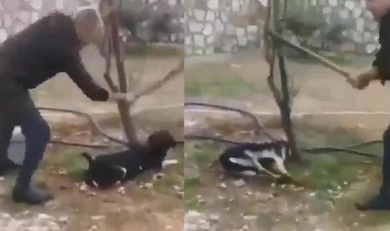 Köpeği ağaca bağlayarak sopayla öldürdü!
