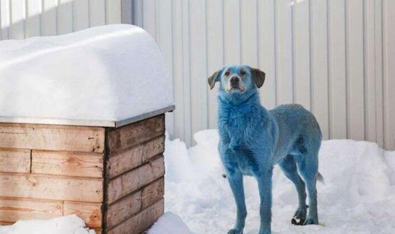 Mavi köpeklerin ardından, şimdi de yeşil köpekler görüldü!