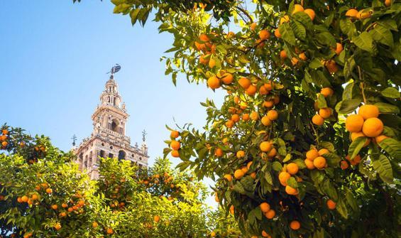 Dalda kalan meyveleri böyle değerlendirecekler!