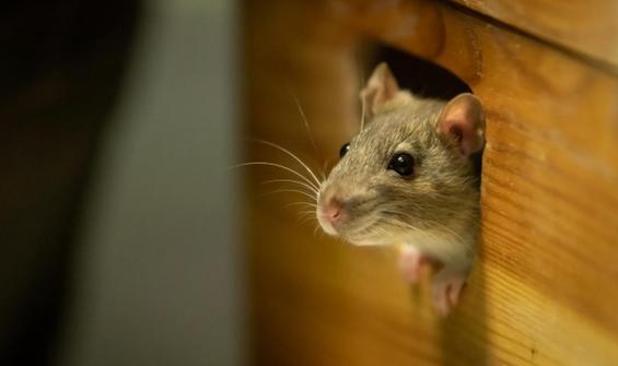 Kediler, köpekler, fareler ve 'mutasyonlar'...