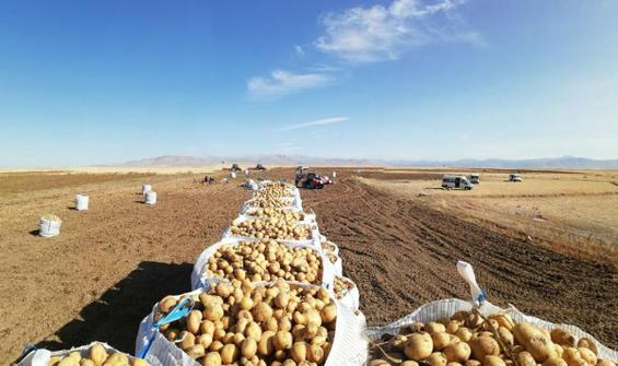 İhtiyaç sahiplerine bedava patates ve soğan dağıtılacak