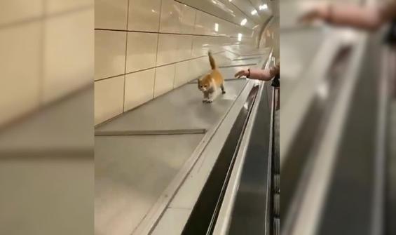Metroda kaydırak keyfi yapan kedi kamerada