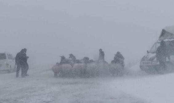 Baharın ortasında kara kış! Tipiye yakalanan 20 koyun dondu