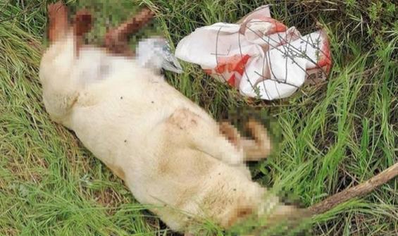 Köpeği öldürüp çuvalın içinde araziye attılar!