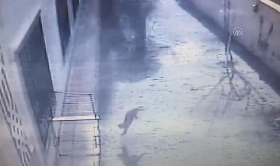 4'üncü kattan düşen kedinin kurtuluşu kamerada