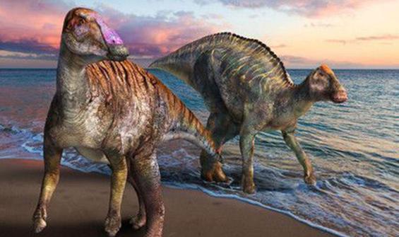 72 milyon yıl önceye dayanan 'yeni tür' kayıtlara geçti
