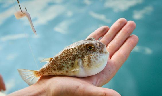 Denizlerde panik yaratıyor! Bu balığı avlayana 5 TL
