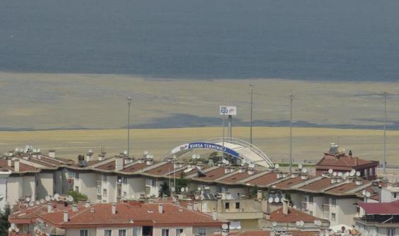 Marmara'da deniz salyası kabusu büyüyor