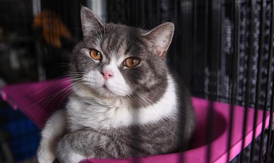 Böyle vahşet görülmedi! Polis 'seri kedi katili'ni arıyor
