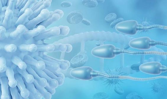Koronavirüs aşısı spermlere zarar veriyor mu?