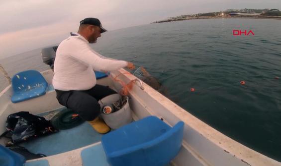 Ağa dolanan Caretta Caretta'nın yardımına balıkçılar koştu