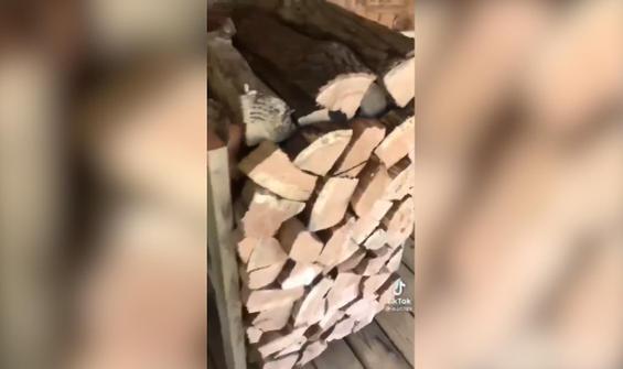 Odun yığını görüntüsüne benzeyen mini buz dolabı