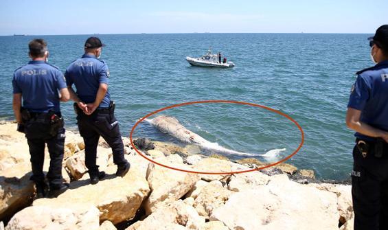8 metrelik dev Mersin'de sahile vurdu!