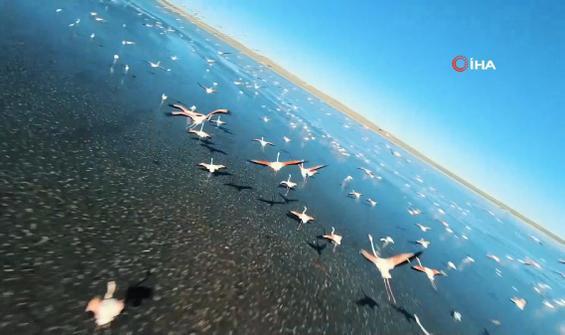 Flamingoların gözünden Düden Gölü izleyenleri büyüledi