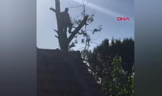 Budadığı ağaçta mahsur kalınca itfaiye kurtardı