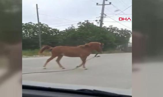Başıboş at sürücülere zor anlar yaşattı