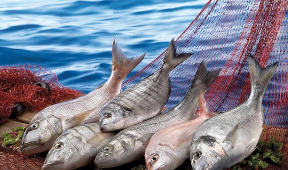 Su ürünleri ihracatı 500 milyon doları aştı