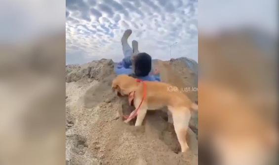 Köpek sahibinin altındaki kumu kazınca olanlar kamerada