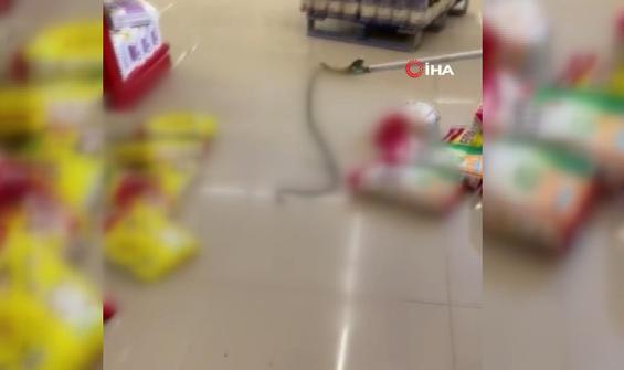 Market raflarından yılan çıktı