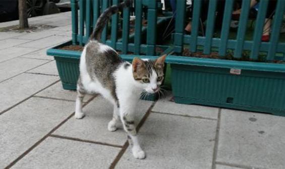 Kedi yediğini itiraf etti! Sınır dışı edilecek
