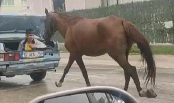 Otomobil bagajında ipe bağlı atı koşturdu!