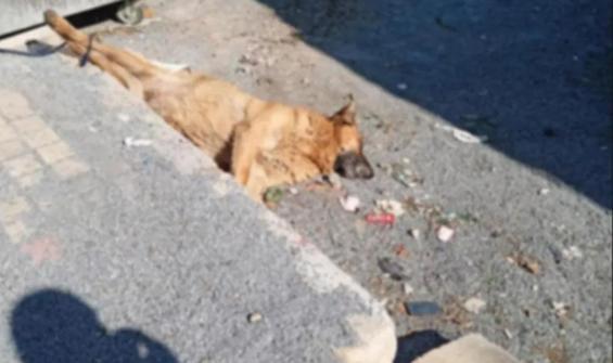 Önce öldürdüler sonra ayaklarını bağlayıp çöpe attılar!