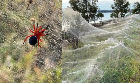 Yağış sonrası ortaya çıktı! Örümcek ağları her yeri kapladı