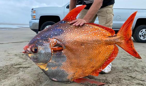 ABD'de karaya vuran dev balığın gizemi sürüyor