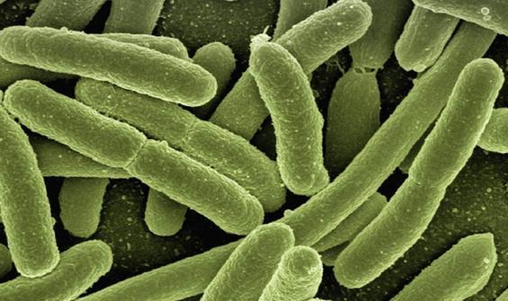 Binlerce yıllık buzda 28 yeni virüs!