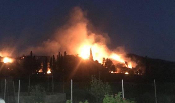Bodrum'da 10 hektar alan kül oldu