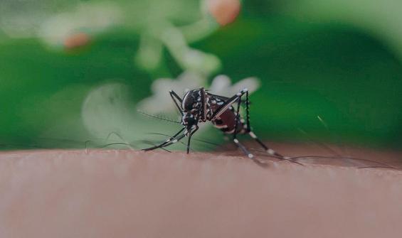 Asya Kaplan Sivrisineği uyarısı: Asıl tehdit Karadeniz'de