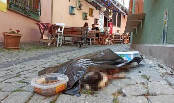 Sokak kedisi vahşice katledildi