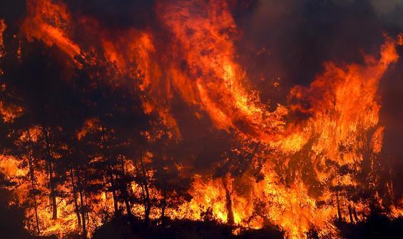 Antalya'daki orman yangınına ilişkin yeni açıklama