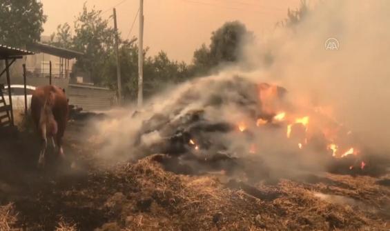 Yangının ortasında bir köyde can pazarı kamerada