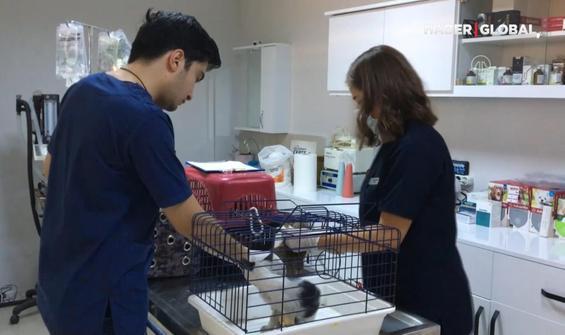 Gönüllü veterinerler yaralı hayvanlar için seferber oldu