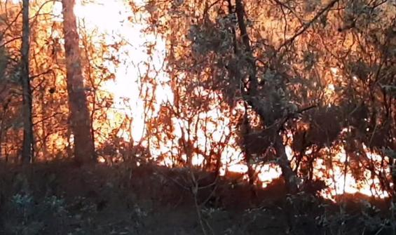 Karabük'te 10 dönüm orman yandı