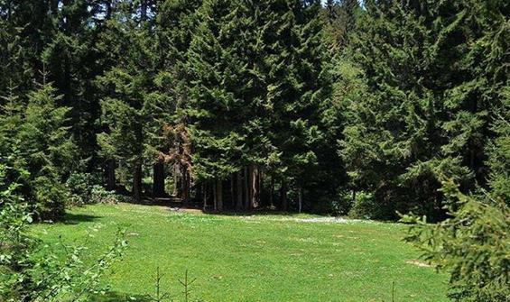 Ormanlık alanlara girişler 15 Eylül'e kadar yasak!
