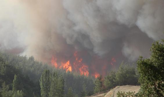 Denizli'deki 5 orman yangını tamamen söndürüldü