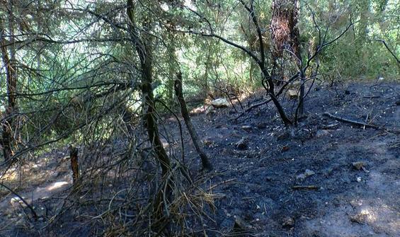 Aydos'ta yangın büyümeden söndürüldü