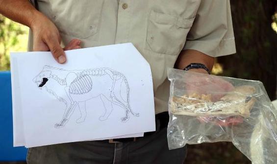 Bu kemikler 4 bin yıl öncesine ait! İlk kez bulundu