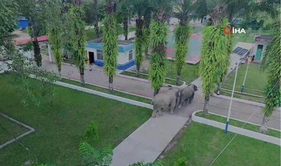 Filler karakolu bastı!