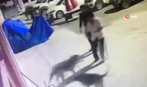 Sokak köpeklerini eziyet ederek toplayan personele ceza