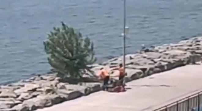 İBB, Florya sahilindeki ağaçları kesti' iddiası
