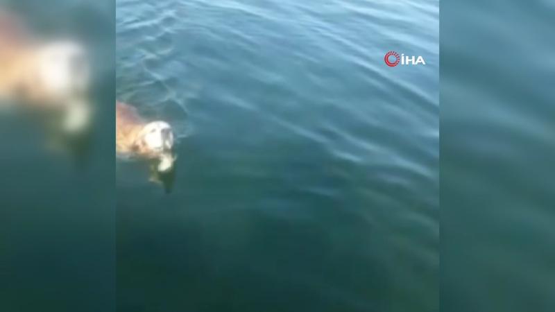 Boğulmak üzere olan köpeğe balıkçılardan yardım eli