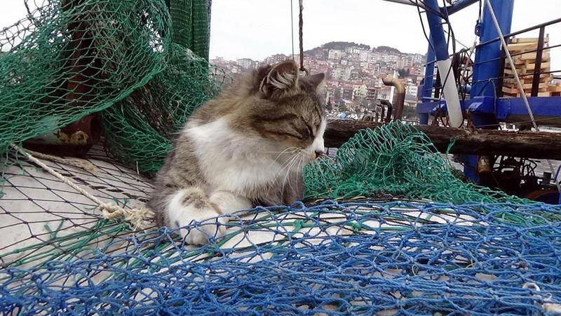 Kaybolup tekneyle kıta değiştiren inatçı kedi bulundu